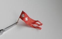[Obrazek: thumb_holk-bandera.jpg]